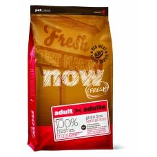 NOW NATURAL holistic беззерновой корм для взрослых собак со свежим мясом ягненка